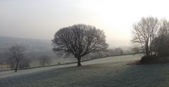 Trees in a frosty Worrall