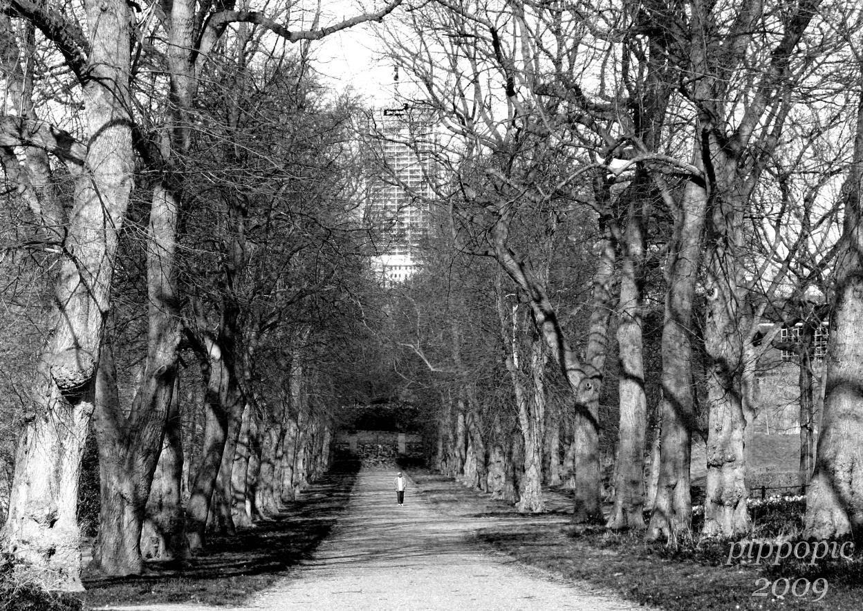 Norfolk Park, the Limes  Avenue.