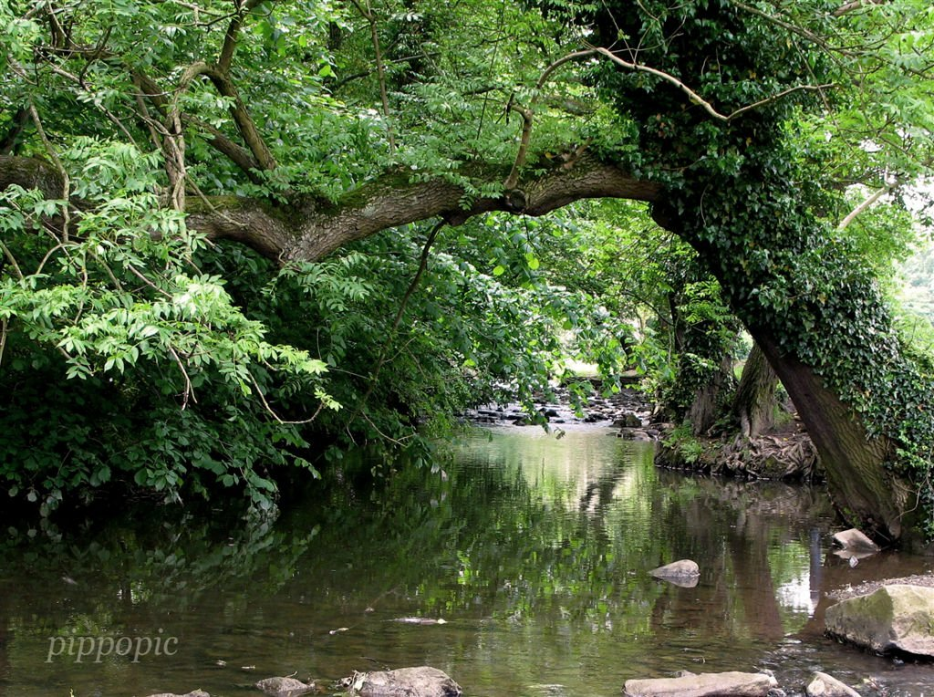River Sheaf, Millhouses Park
