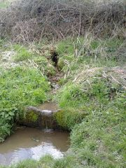 Bole Hill Spring